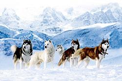 南極物語 .jpg
